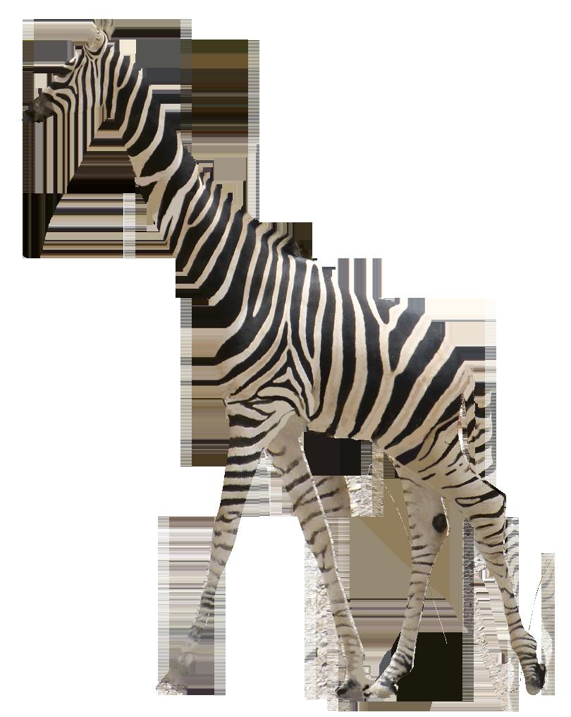 Altéréo Girafe zébrée de l'offre Girafium