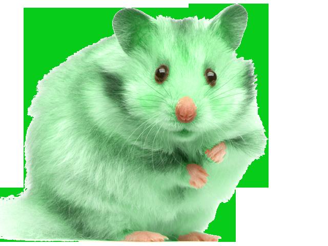 Altéréo Souris verte de l'offre souricium